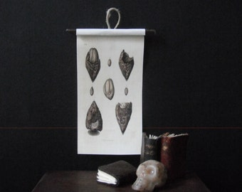 Miniature Natural History Chart --- Fossils
