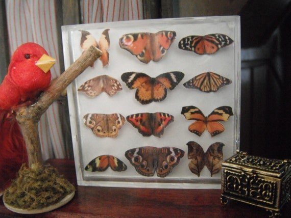 Miniature Exotic Butterfly Collection