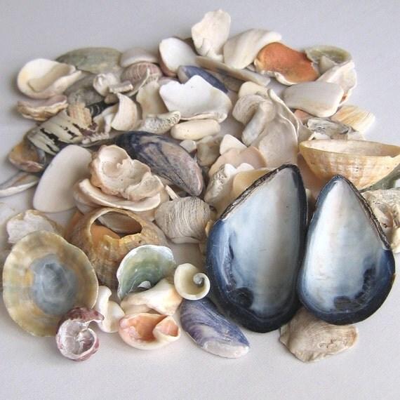 100 Natural Sea Shell Fragments Shards Mosaic and Craft Supplies (1372)