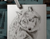 """Wolf In Graphite, Nature, Wild Life, 4""""x4"""" Small Art Card"""
