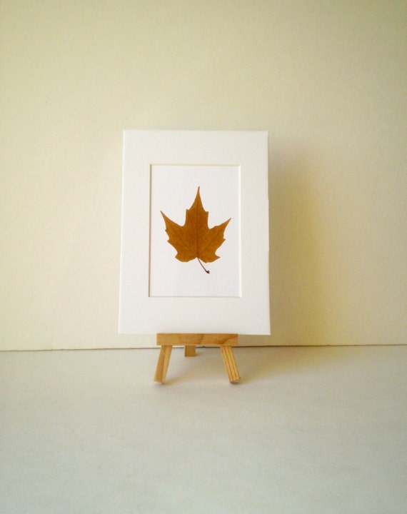 Un-framed Real Brown-Mustard Maple Leaf Pressed Art - 5 by 7 inches ---A29