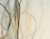 Single Striped Long Feather Earring