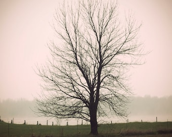 Tree Photograph - Fog Photo - Photograph - Tree Photo - PRINT - Tree No. 1 - 8x10 Ready to Ship - Eclectic Photo