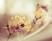 spring nature photography / neutral tones, cream, flower, bloom, blossom, yellow / life is full of beauty / 8x10 fine art photograph