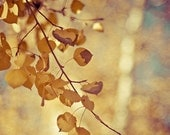nature fall autumn aspen photograph / gold, golden, yellow, fall foliage / shimmer / 8x10 fine art photo - shannonpix
