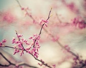 zen pink blossom spring nature photography / bloom, flower, redbud, robins egg blue / a pink day / 8x10 fine art photo - shannonpix