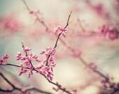 zen pink blossom spring nature photography / bloom, flower, redbud, robins egg blue  / a pink day / 8x10 fine art photo