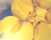 yellow balloon photography / sunny, lemon yellow, blue sky, birthday, party, sun, celebrate / shine through / 8x10 fine art photo