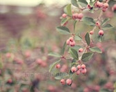 autumn fall nature photography / berries, berry, tree, spring, pink, green, gold, pastel / pink berries / 8x8