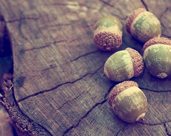 acorn nature photography / autumn, fall, woodland, rustic, earth tones, forest green, brown, wood, wooden, still life / acorns / 8x10