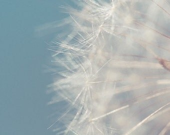 dandelion macro photograph / sky blue, soft white, close-up, fluffy, soft / fluff / 8x10 fine art photo