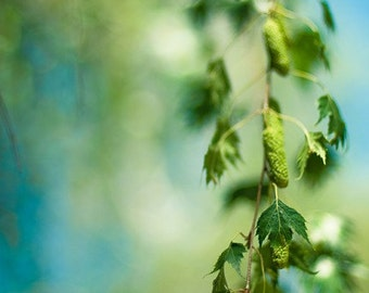 green nature photography / fresh, lime green, summer, spring, turquoise, aquamarine / take only pictures / 8x12 fine art photograph