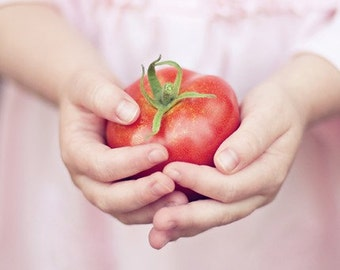 tomato food photography / child hands, garden, grow your own food, vegetable, fruit, red, farm, pink / harvest / 8x8 fine art photo