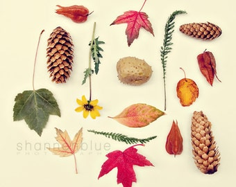 autumn nature photography / fall, pine cone, leaf, leaves, maple / rust, red, copper, brown, forest green, yellow / autumn collection / 8x8