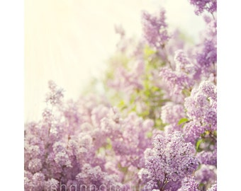 lilac spring botanical photography / purple, lavender, sunshine, nature, feminine, flower / smells like spring / 8x10 fine art photo