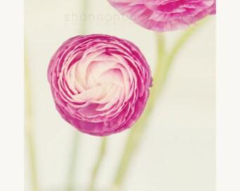 ranunculus still life photography / flower, nature, pink, lime green, spring, minimalist, botanical / sitting pretty / 8x10 fine art photo