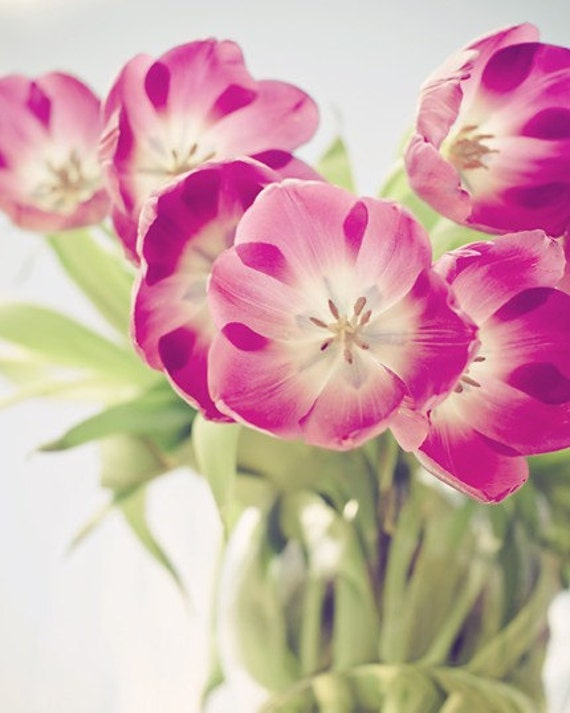 tulip photography / fresh, spring, nature photography, violet, fuchsia, green, home decor / smiley faces / 8x10 fine art photo