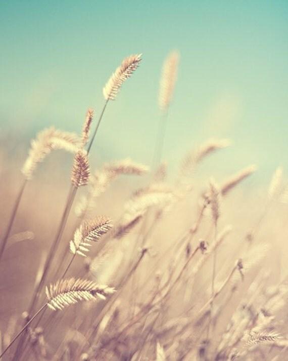 summer field nature photography / gold, aquamarine, robins egg blue, light, sun, wheat / golden no.1 / 8x10 fine art photo