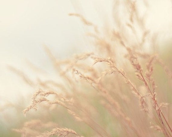 nature photography, earth tones, neutral tones, grass, wheat, oatmeal, beige / blowing in the wind / 8x10 fine art photo
