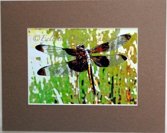 Dragonfly Altered Photo Matted Print, Natural History Photographic Art, Dragonfly Art, Woodland Print Home Decor