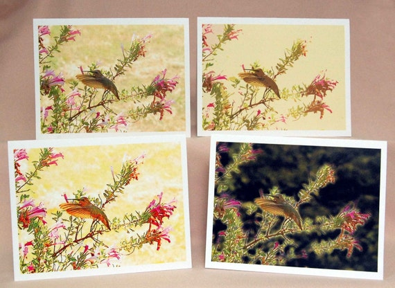 Note Cards - Hummingbird Series Set of 4, Nature Note Cards, Hummingbird Blank Note Cards, Woodland Photographic Art Note Cards, Set of Four