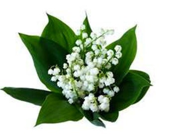 4 oz LILY of the VALLEY Candle Soap Fragrance Oil Premium Grade Candle Soap Making Supplies