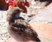 Four Mini Cards Featuring Little Birdie Again