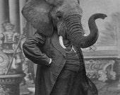 5x7 Hortence J Pacadorf - Elephant Photographic Art Print
