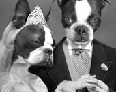 Custom Wedding Portrait (2 Pets) - 1 5x7 - JPG - One Personalized Pet Portrait