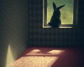 Bunny on window sill