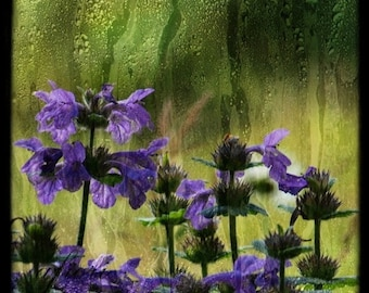 Visual Poetry 4, Purple Rain, Fine art photograph, 8x8