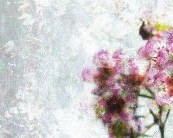 Winter Garden 1 - The Escape