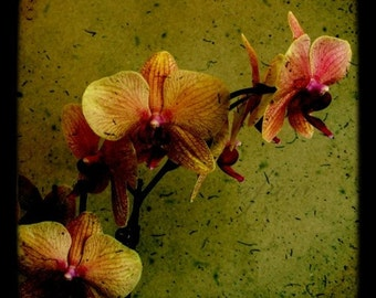 Dark Orchid 4, Spicy green, Fine art photograph, 8x8 print