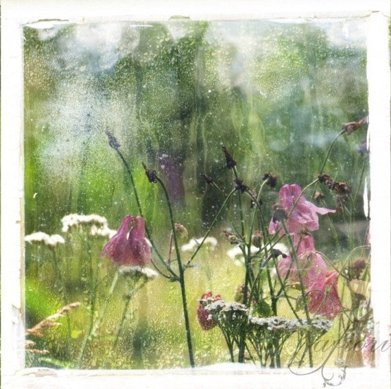 Visual Poetry 1, Fine art photograph, pale pink garden, 8 x 8