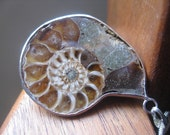 ammonite necklace in organic chocolate cream & sterling silver. fossil necklace.