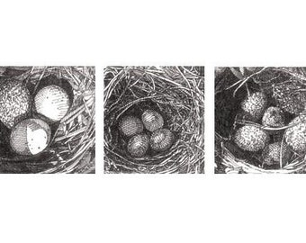 Pen and Ink Drawing Reproduction Bird Nest Note Cards 2