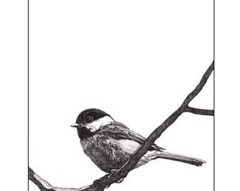 Pen and Ink Drawing Reproduction Black-capped Chickadee Note Cards