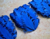 SET OF 4 - Royal Blue and Black Feather Pads