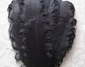 Feather Pad - 1 Black Nagorie Curled Goose Feather Pad