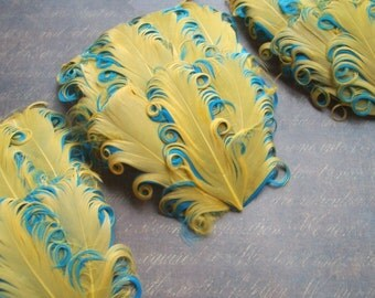 SET OF 5 - Gold on Aqua Curled Goose Feather Pads