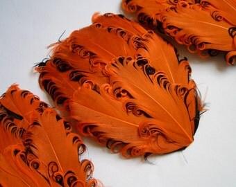 SET OF 5 -3.50 ea - Orange on Black Nagorie Feather Pads