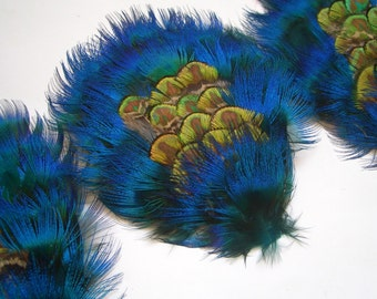 A DOZEN - Peacock Plumage Feather Pad in Turquoise Blue and Golden Green - Rare Style