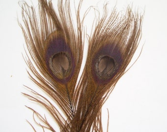 LOT OF 5 - Dyed Brown Peacock Feathers