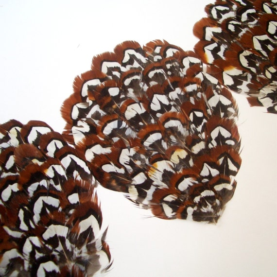 Set of 12 - Brown Reeves Pheasant Feather Pads - Lowest Price