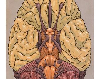 Brain Print