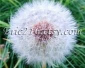 Make A Wish Dandy Lion fine art flower print