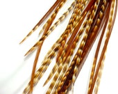 "10 Ginger Grizzly Variant Feather Extensions, 5-6"" Tiger Stripes"