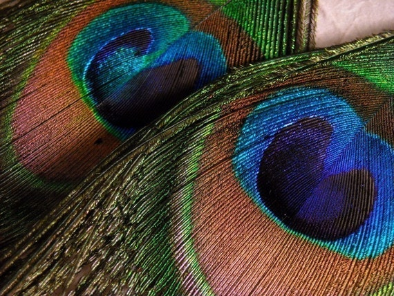 Peacock Littles - SMALL Peacock Feather Earrings - Cruelty Free