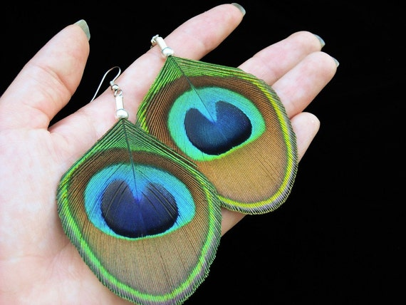 Paisly Peacock Drops -  Extra-Large Trimmed Peacock Eye Feather Earrings - Cruelty Free - - Ready to Ship