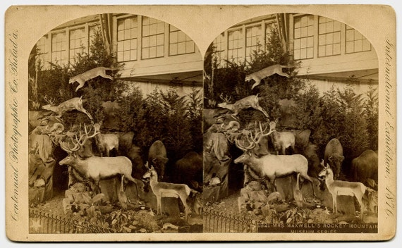 Taxidermy Display Philadelphia Centennial International Exposition 1876 Real Photo Stereoview II